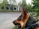07-10.05.2019 Warsztaty doskonaląco- unifikacyjne dla instruktorów psów ratowniczych (13)