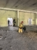 07-10.05.2019 Warsztaty doskonaląco- unifikacyjne dla instruktorów psów ratowniczych (9)
