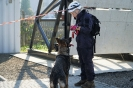 15-19.10.2019 Egzaminy psów Nowy Sącz  (2)