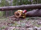 20-24.05.2019 Instruktorzy ścinki drzew  (14)