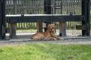 21-24.07.2020 Egzaminy psów Nowy Sącz (26)