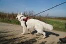21-25.10.2019 Nowy Sącz Szkolenie przewodników psów ratowniczych (2)