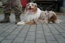 21-25.10.2019 Nowy Sącz Szkolenie przewodników psów ratowniczych (4)
