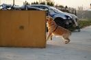 21-25.10.2019 Nowy Sącz Szkolenie przewodników psów ratowniczych (5)