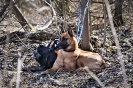 25-28.03.2019 Nowy Sącz szkolenie poszukiwania z psami (3)