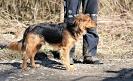 25-28.03.2019 Nowy Sącz szkolenie poszukiwania z psami (4)