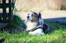 25-28.03.2019 Nowy Sącz szkolenie poszukiwania z psami (5)