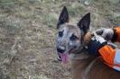4-8 marca 2019 Nowy Sącz egzaminy dla psów  (2)