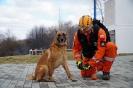 4-8 marca 2019 Nowy Sącz egzaminy dla psów  (8)