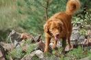 9-11.09.2020 Egzaminy psów - Żagań (14)