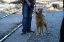 9-11.09.2020 Egzaminy psów - Żagań (31)