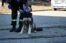 9-11.09.2020 Egzaminy psów - Żagań (32)