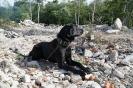 9-11.09.2020 Egzaminy psów - Żagań (37)
