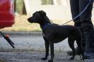 9-11.09.2020 Egzaminy psów - Żagań (4)