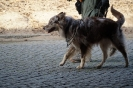 9-11.09.2020 Egzaminy psów - Żagań (9)